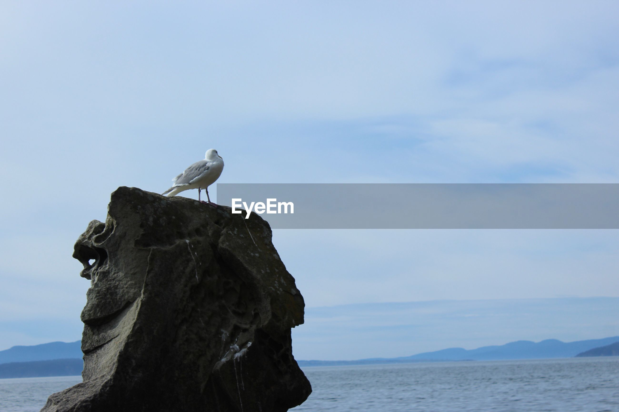 animal themes, animals in the wild, sea, wildlife, one animal, bird, water, sky, horizon over water, rock - object, perching, nature, seagull, focus on foreground, beauty in nature, day, outdoors, rock, side view, full length