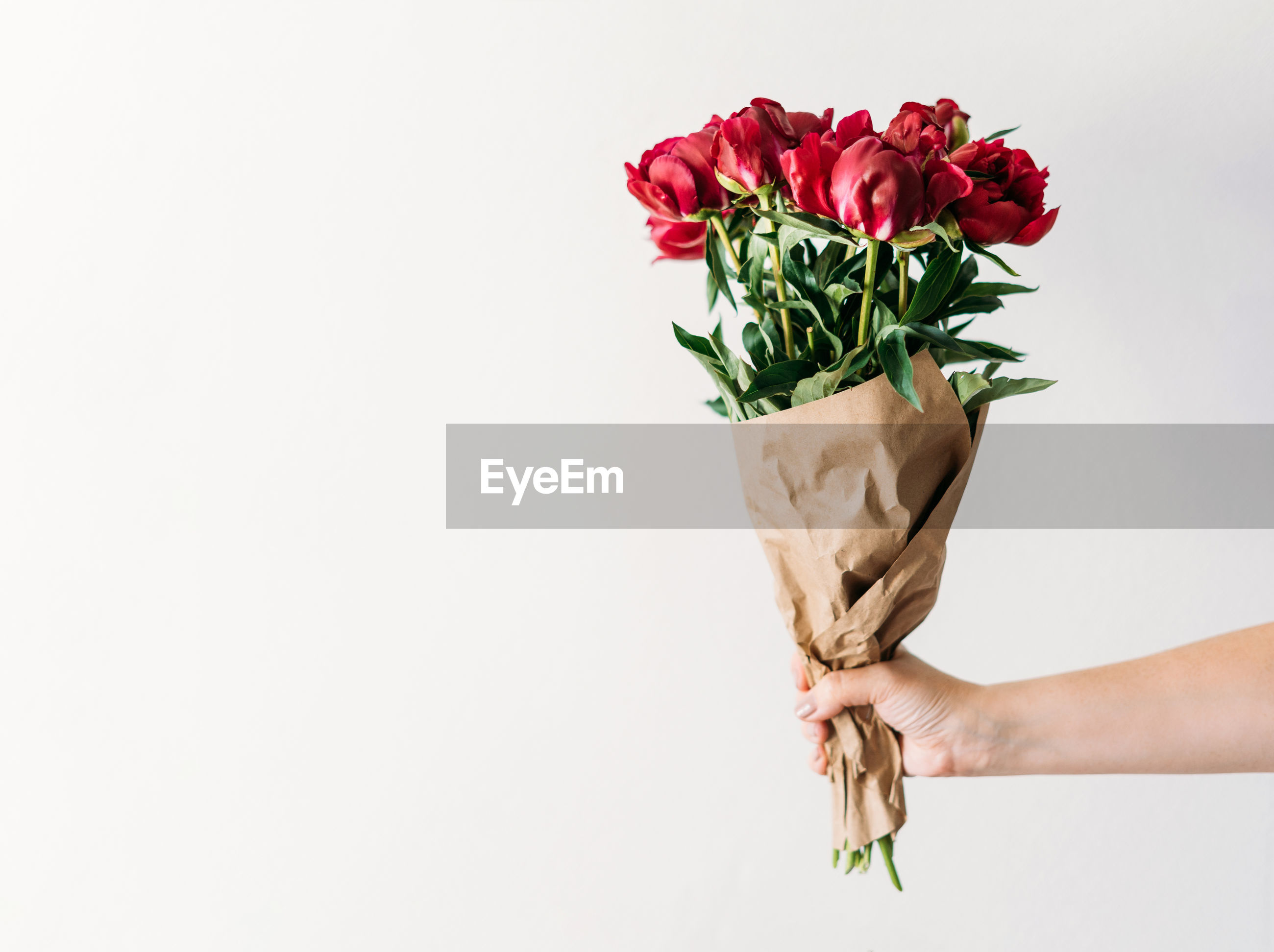 PERSON HOLDING ROSE AGAINST WHITE BACKGROUND