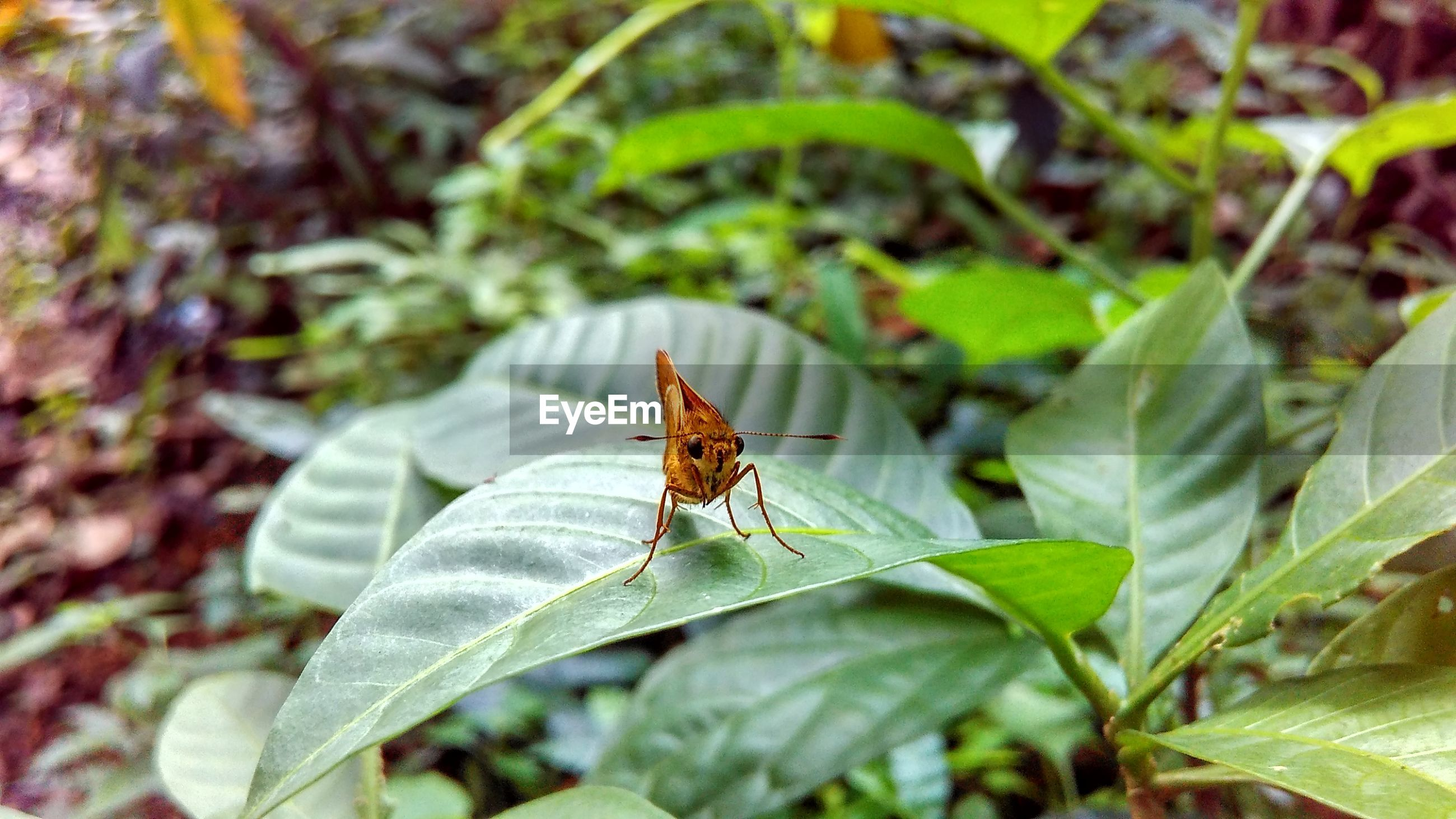 animal themes, wildlife, insect, leaf, green color, focus on foreground, close-up, plant, nature, selective focus, outdoors, day, beauty in nature, no people, growth
