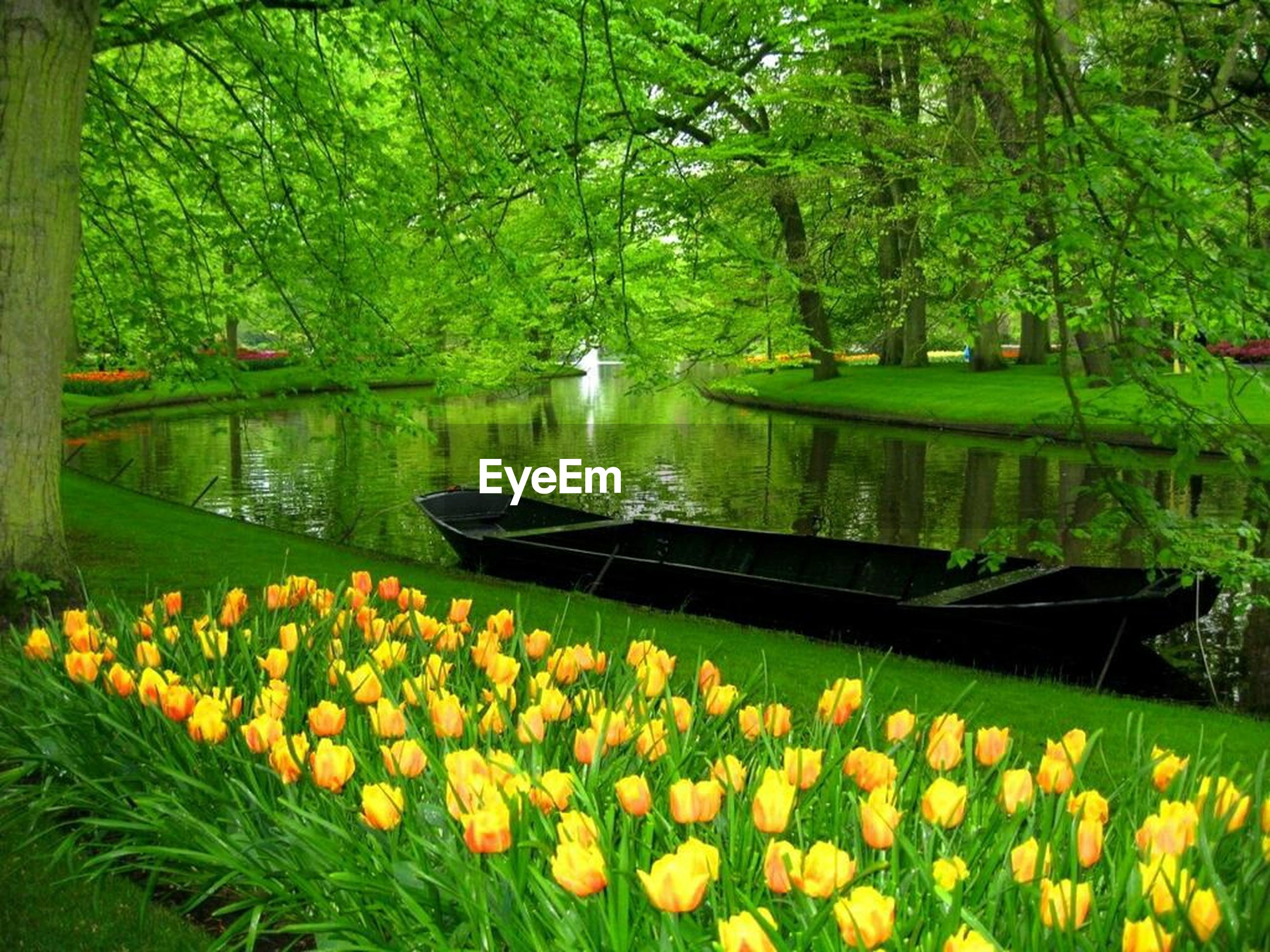 flower, tree, growth, beauty in nature, water, nature, tranquility, lake, tranquil scene, plant, transportation, yellow, reflection, freshness, scenics, green color, park - man made space, outdoors, day, fragility