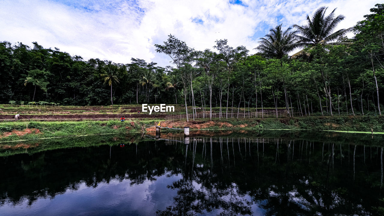 reflection, plant, water, tree, cloud - sky, tranquility, sky, tranquil scene, beauty in nature, nature, palm tree, growth, scenics - nature, land, waterfront, tropical climate, lake, green color, no people, outdoors, coconut palm tree