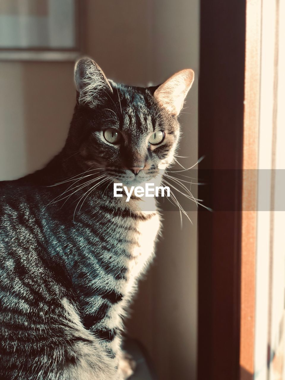 domestic, domestic cat, pets, cat, domestic animals, feline, mammal, animal themes, animal, one animal, vertebrate, indoors, no people, whisker, looking, focus on foreground, home interior, close-up, window, looking away, tabby, animal eye