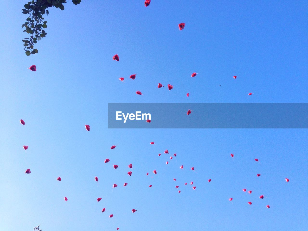Low Angle View Of Heart Shape Balloons Flying Against Clear Blue Sky
