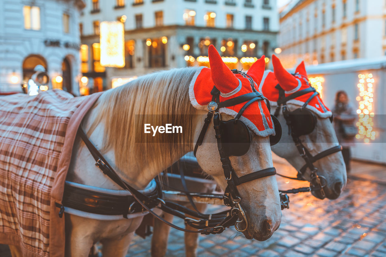 domestic animals, livestock, domestic, horse, mammal, animal, pets, animal themes, animal wildlife, city, architecture, working animal, built structure, focus on foreground, horse cart, cart, building exterior, vertebrate, group of animals, street, horsedrawn, herbivorous, outdoors