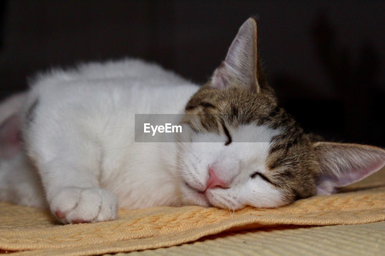 domestic, pets, domestic animals, animal, relaxation, mammal, animal themes, cat, domestic cat, feline, vertebrate, eyes closed, one animal, sleeping, resting, close-up, no people, indoors, focus on foreground, lying down, whisker, napping