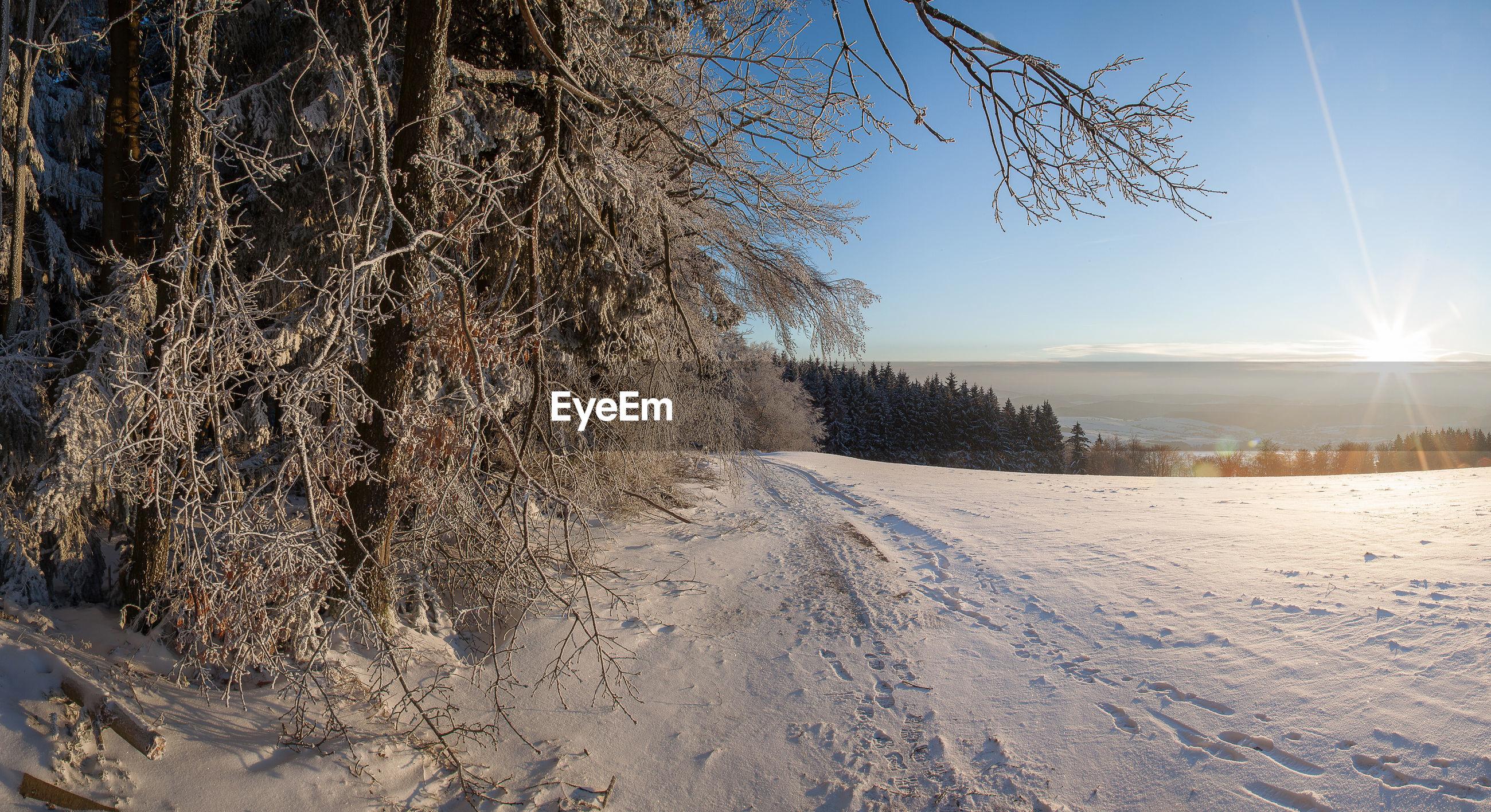 BARE TREE ON SNOW FIELD AGAINST SKY