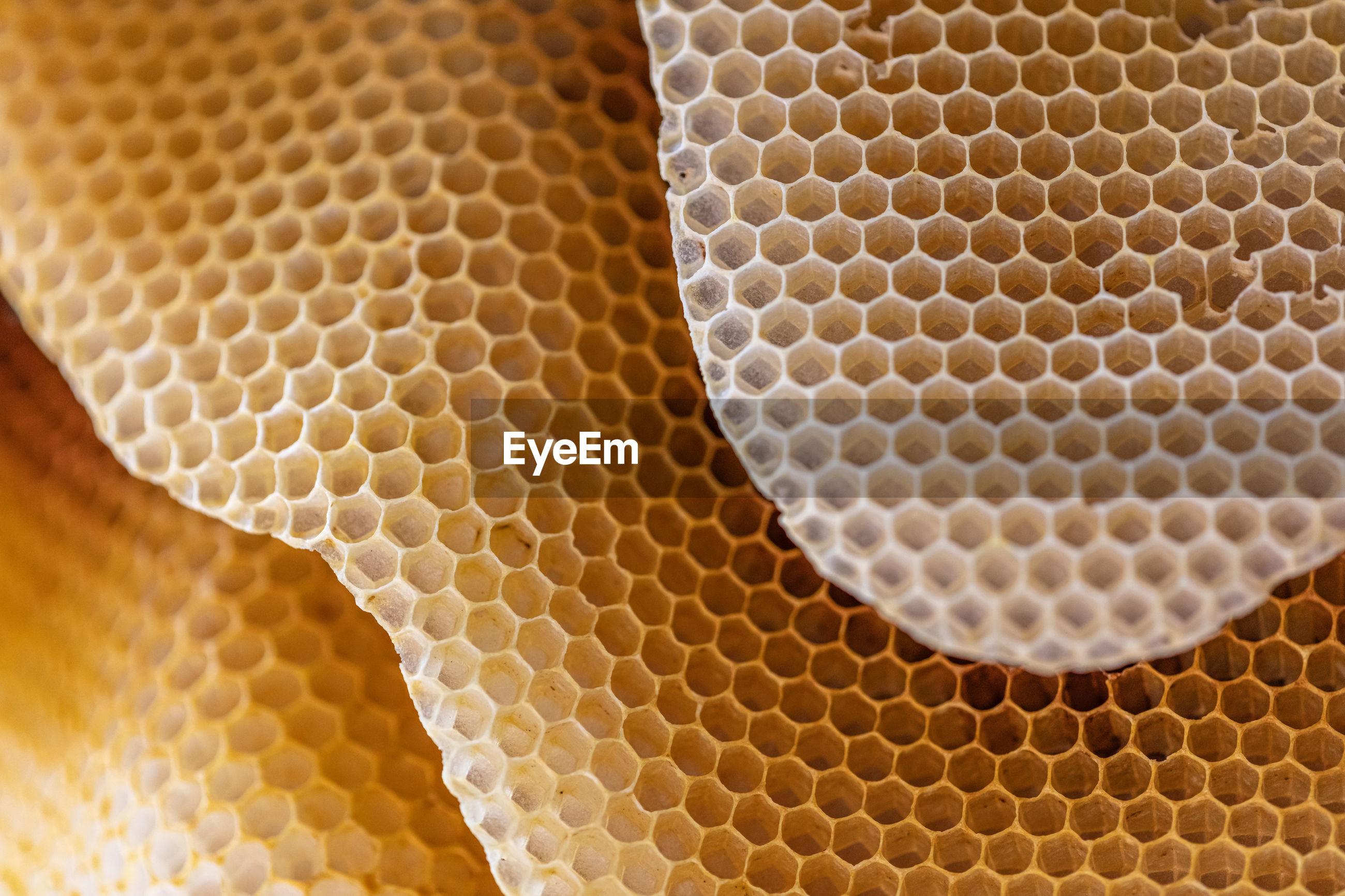 MACRO SHOT OF BEE ON A WALL
