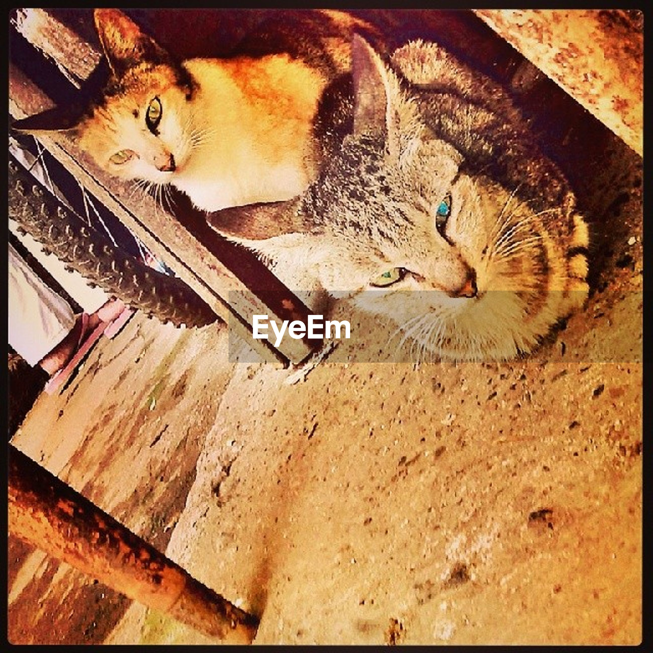 transfer print, animal themes, one animal, auto post production filter, domestic animals, indoors, pets, high angle view, mammal, cat, domestic cat, wildlife, relaxation, sleeping, lying down, animals in the wild, no people, full length, portrait, looking at camera