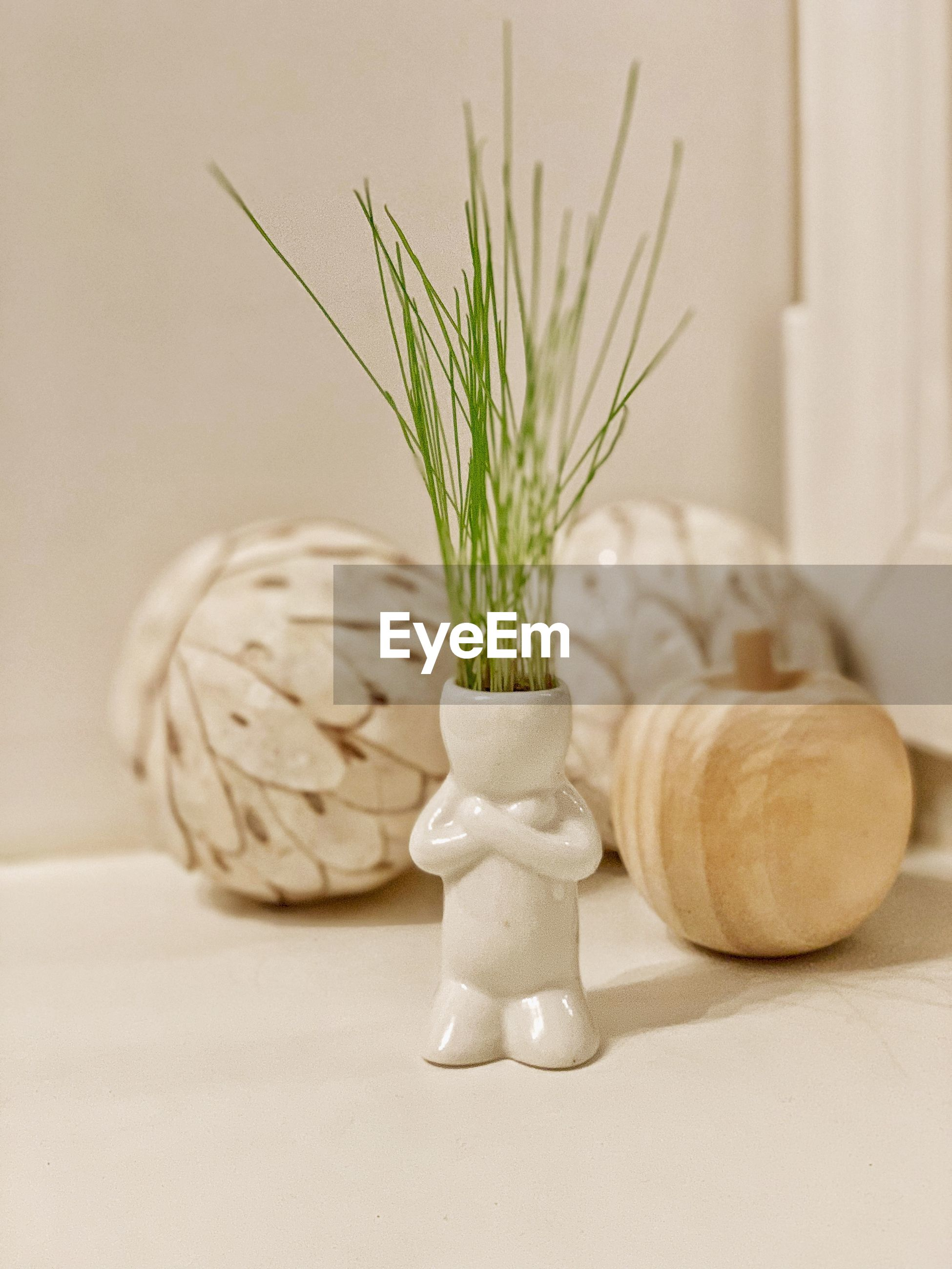 Close-up of white potted plant on table