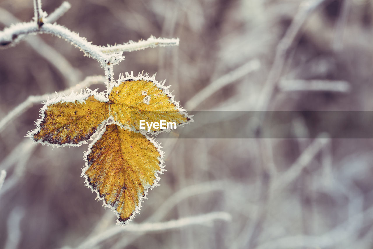 Close-Up Of Frozen Leaf During Autumn