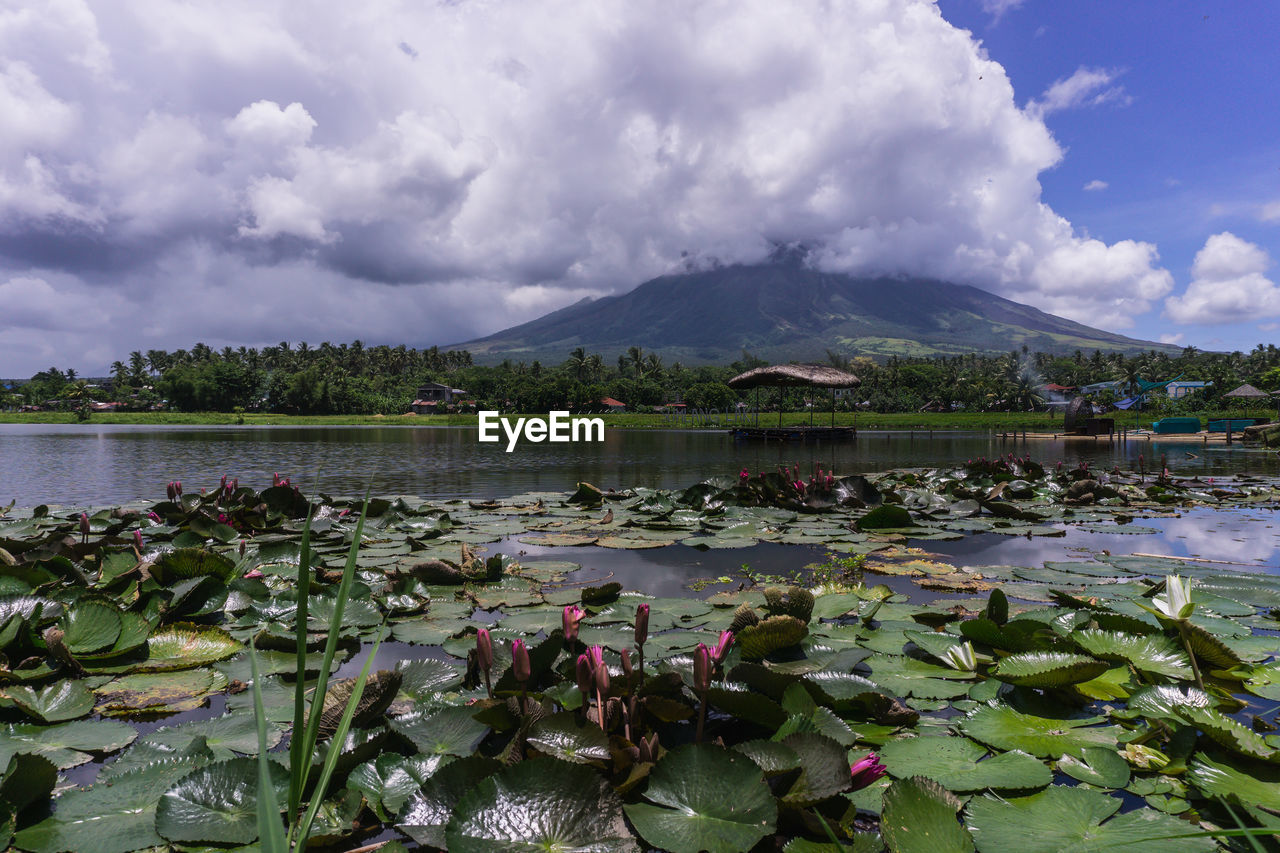 sky, beauty in nature, water, cloud - sky, mountain, scenics - nature, nature, tranquility, lake, tranquil scene, plant, flower, day, growth, no people, water lily, non-urban scene, floating, floating on water