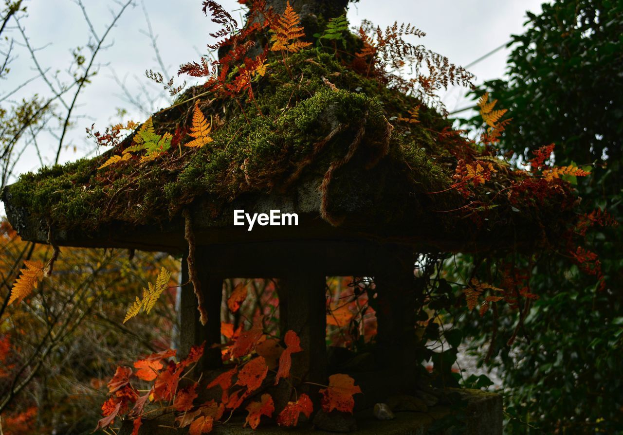 tree, plant, autumn, change, growth, nature, no people, focus on foreground, plant part, day, leaf, outdoors, low angle view, beauty in nature, architecture, built structure, branch, sky, tranquility, orange color, maple leaf, leaves, fall