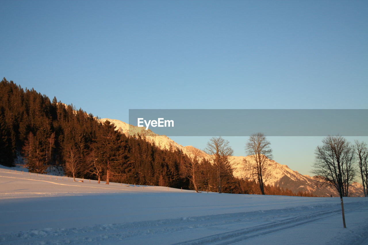 snow, cold temperature, winter, nature, tranquil scene, copy space, tranquility, tree, scenics, beauty in nature, clear sky, landscape, outdoors, no people, day, blue, mountain, bare tree, sky