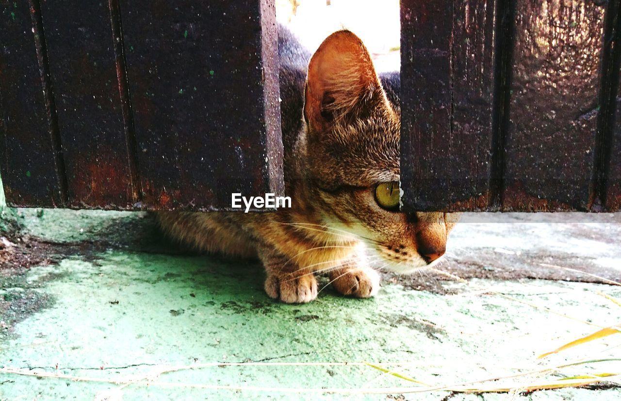 Close-Up Of Cat Peeking From Door