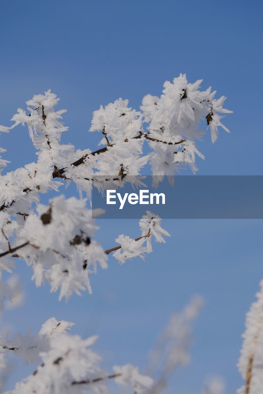 Low Angle View Of White Flower Tree Against Sky