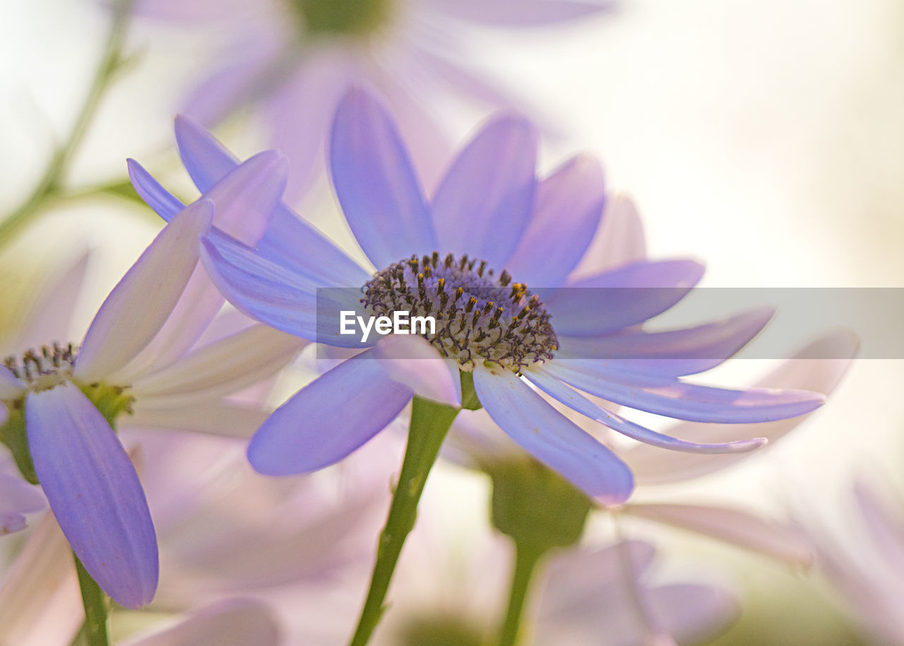 CLOSE-UP OF PURPLE AND WHITE FLOWER