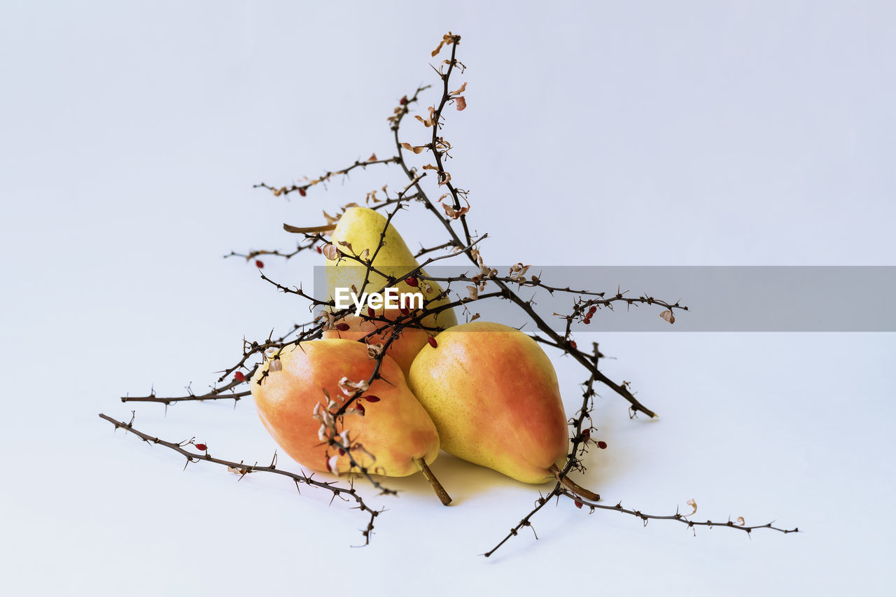 fruit, freshness, food, food and drink, tree, healthy eating, no people, plant, branch, nature, close-up, wellbeing, sky, day, low angle view, white background, outdoors, apple tree, growth, apple - fruit, ripe