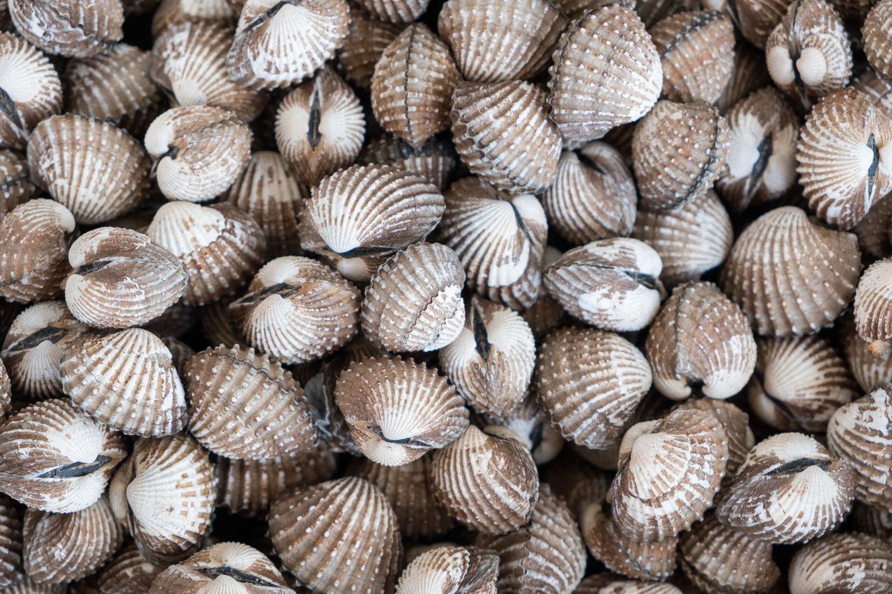 Full frame shot of clam