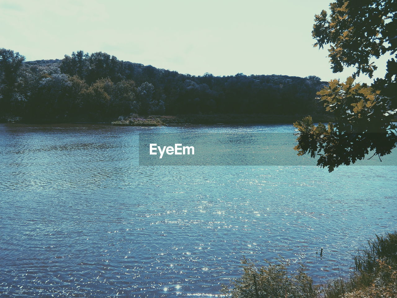 water, nature, tranquility, tree, beauty in nature, scenics, tranquil scene, no people, outdoors, sea, forest, day, sky