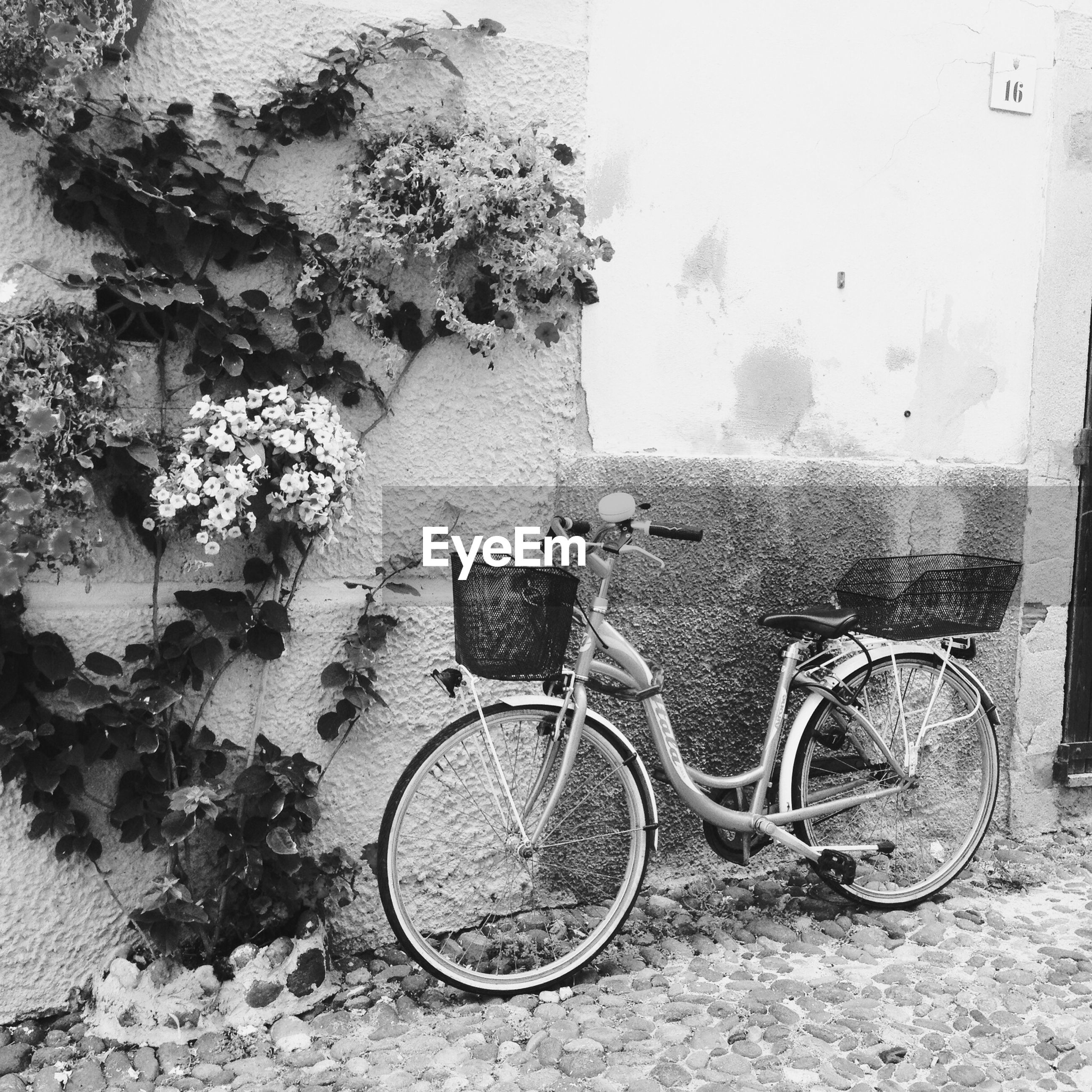 bicycle, building exterior, built structure, parked, architecture, stationary, transportation, parking, land vehicle, mode of transport, wall - building feature, day, absence, no people, wall, street, outdoors, plant, sidewalk, window