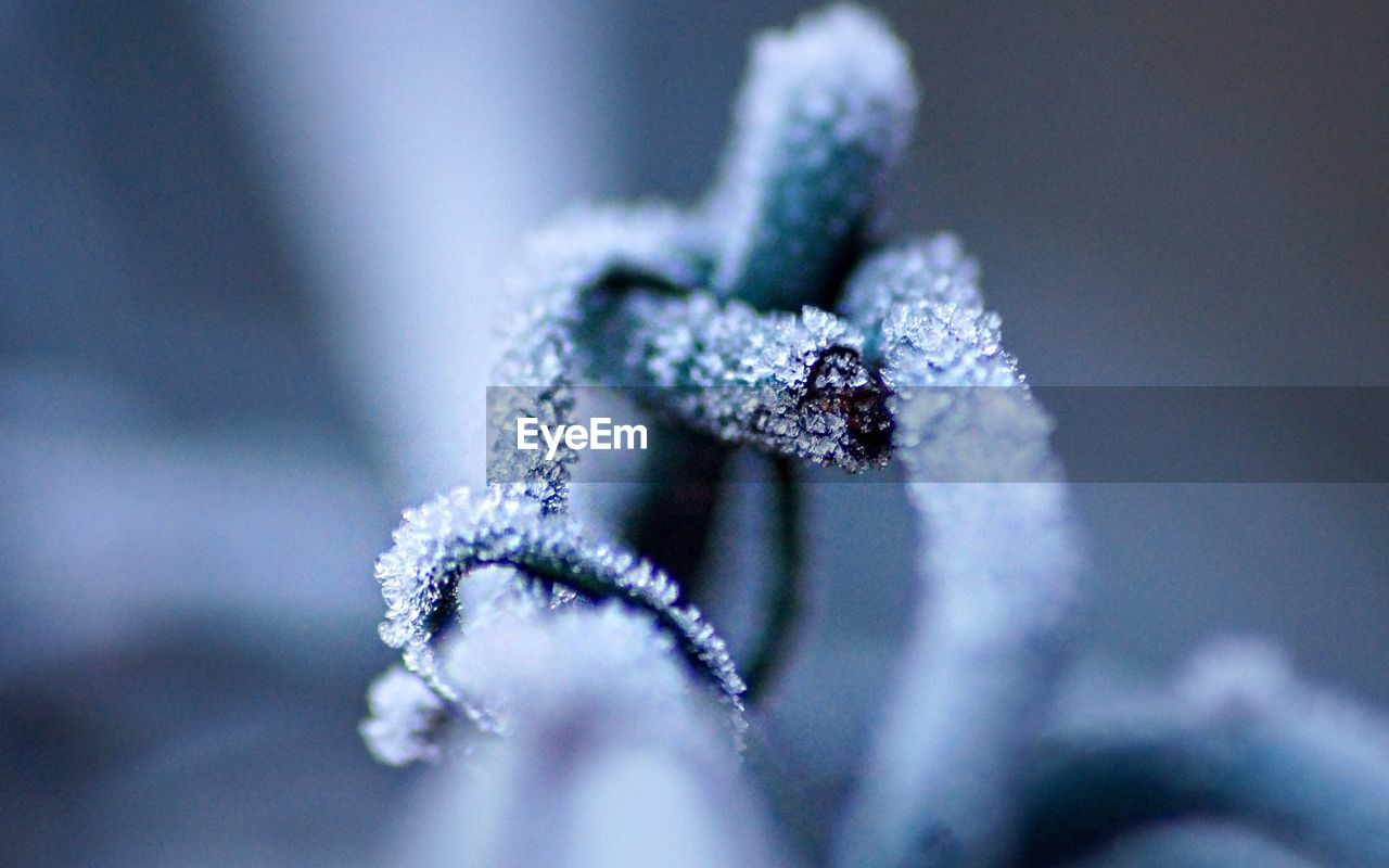 cold temperature, winter, snow, nature, frozen, close-up, selective focus, ice, no people, beauty in nature, outdoors, day, fragility