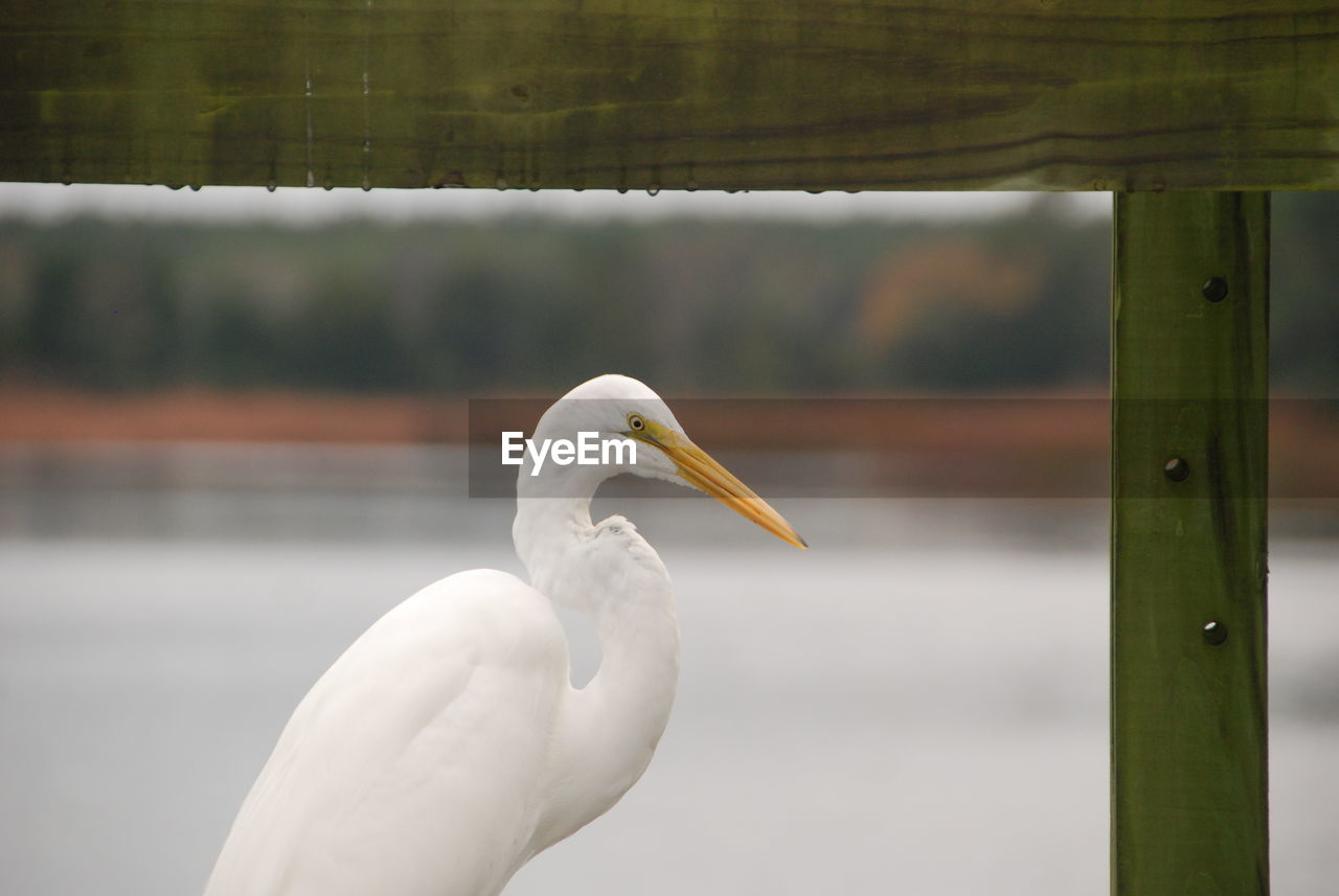 Close-Up Of Bird Against Blurred Background