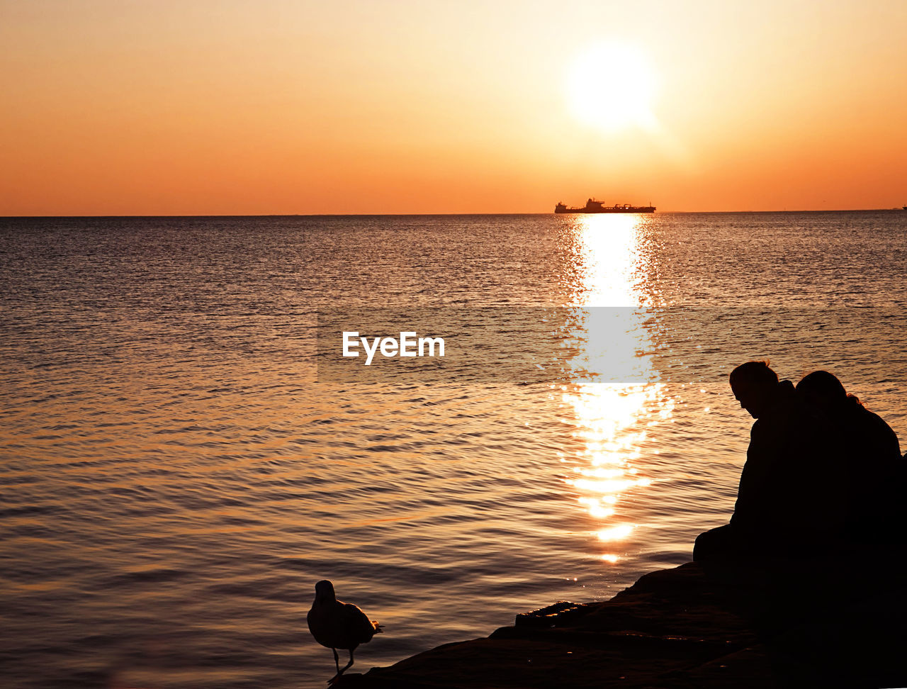 sunset, silhouette, sun, nature, beauty in nature, water, scenics, sea, orange color, reflection, tranquil scene, tranquility, sunlight, idyllic, horizon over water, sky, animals in the wild, outdoors, animal themes, bird, one animal, animal wildlife, beach, travel destinations, no people, swimming, mammal