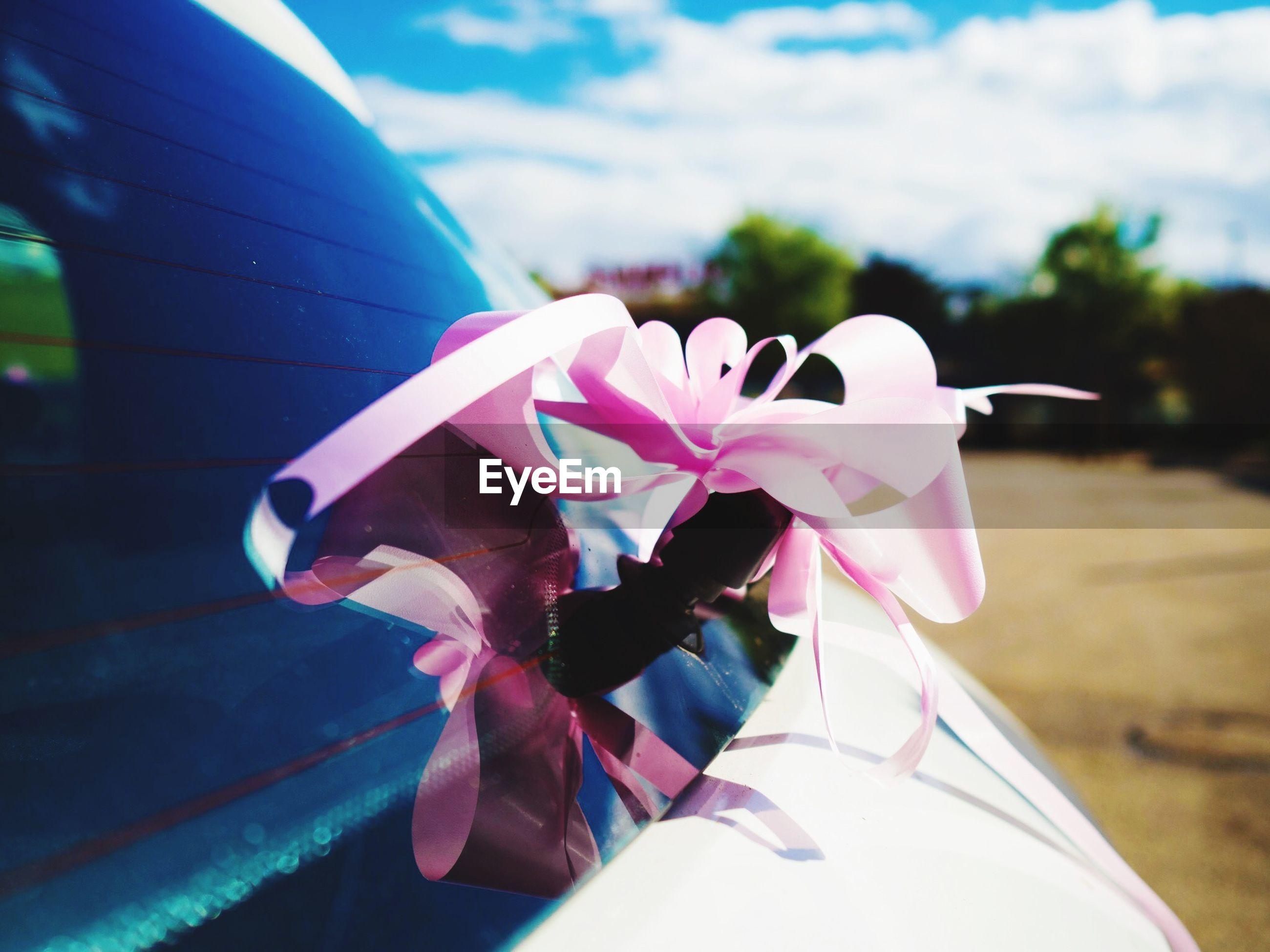 Pink ribbon on car