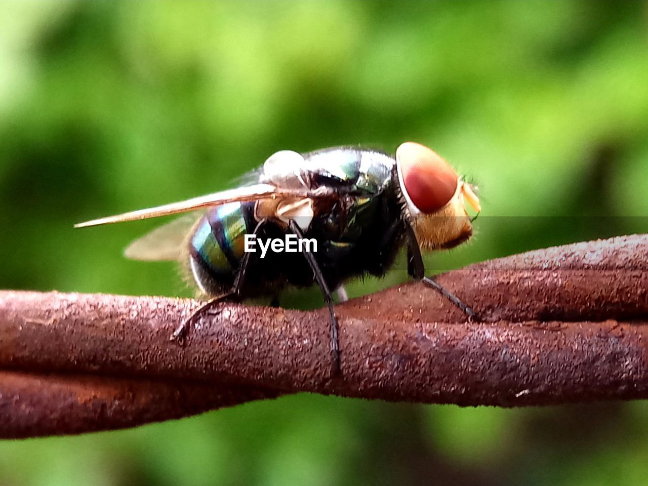 animals in the wild, animal wildlife, insect, animal themes, animal, invertebrate, close-up, one animal, day, focus on foreground, no people, animal wing, nature, outdoors, selective focus, plant, leaf, plant part, fly, green color, animal eye