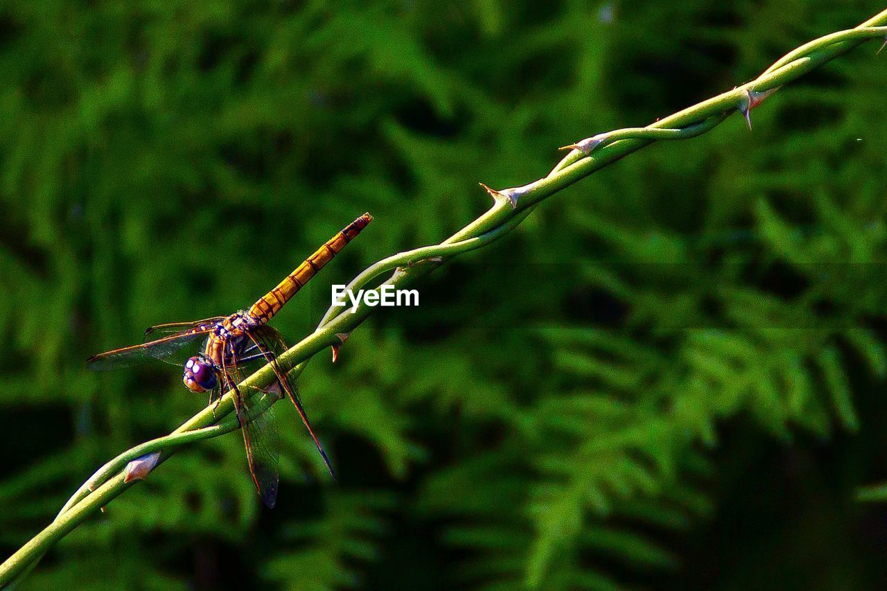 animal wildlife, animal themes, animal, insect, plant, animals in the wild, green color, invertebrate, one animal, nature, close-up, no people, growth, focus on foreground, day, plant part, leaf, tree, outdoors, selective focus