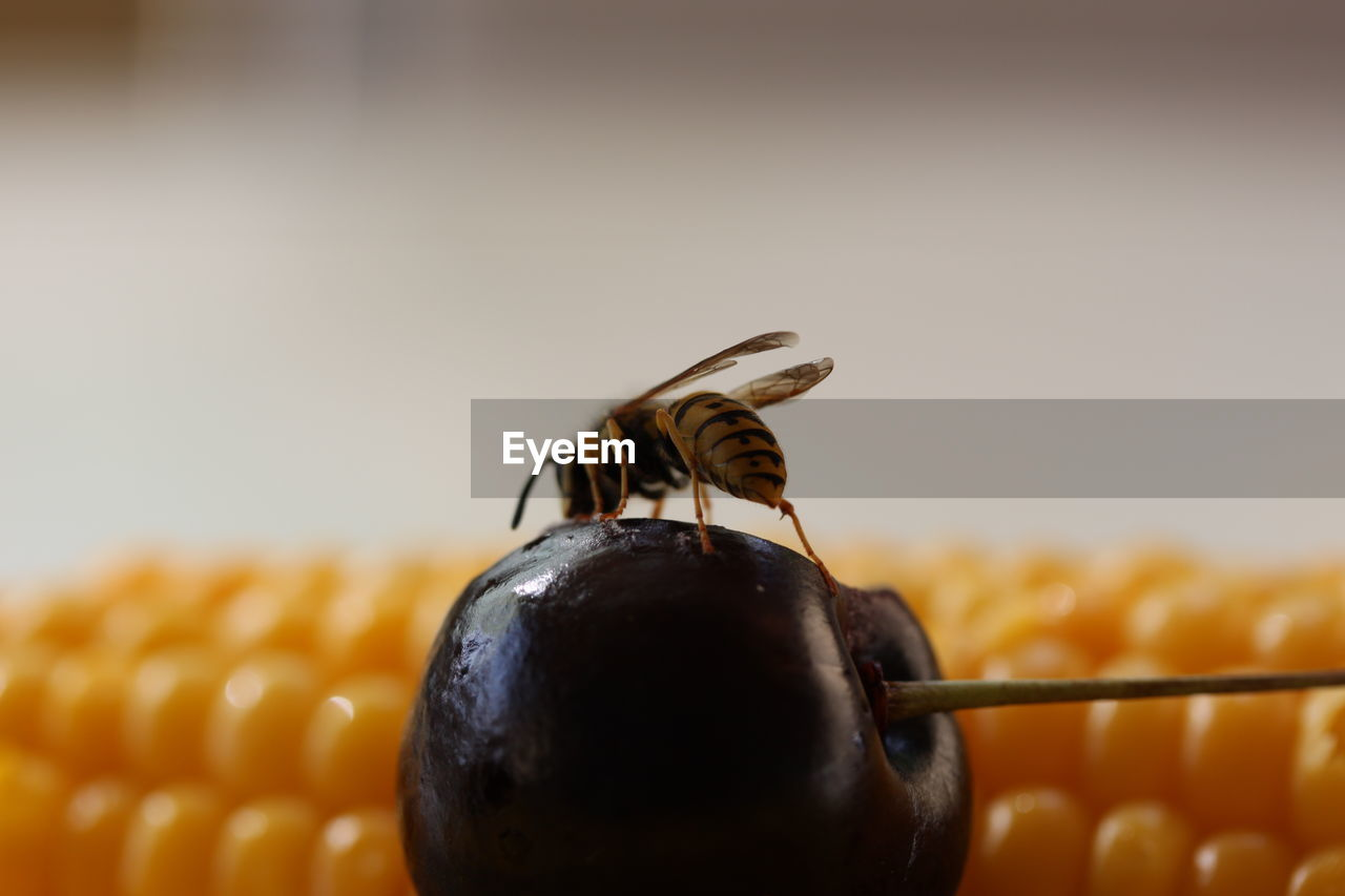 Close-Up Of Wasp On Fruit By Sweetcorn