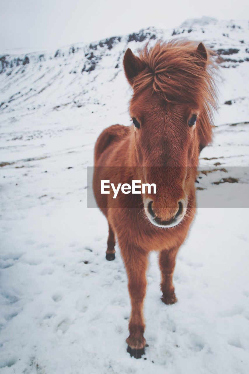 Portrait of horse on snow covered field