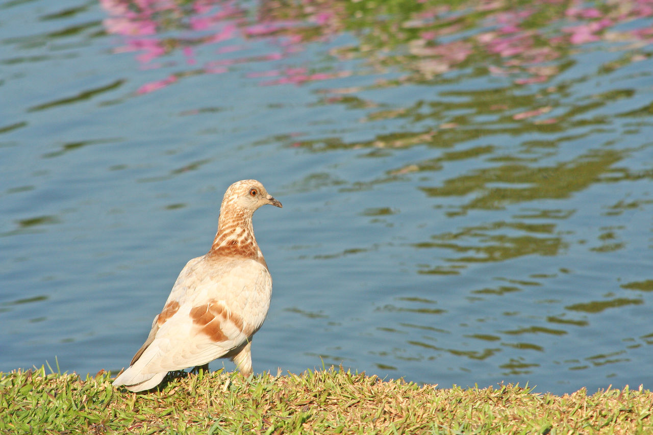 bird, animal wildlife, animals in the wild, animal themes, vertebrate, one animal, animal, water, day, lake, nature, no people, perching, focus on foreground, outdoors, beauty in nature, sunlight, lakeshore, beach, seagull