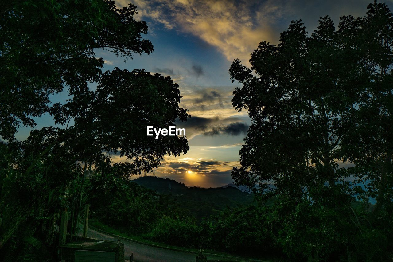 tree, sunset, sky, beauty in nature, plant, scenics - nature, tranquil scene, tranquility, cloud - sky, nature, silhouette, growth, no people, non-urban scene, orange color, idyllic, low angle view, outdoors, land, dusk