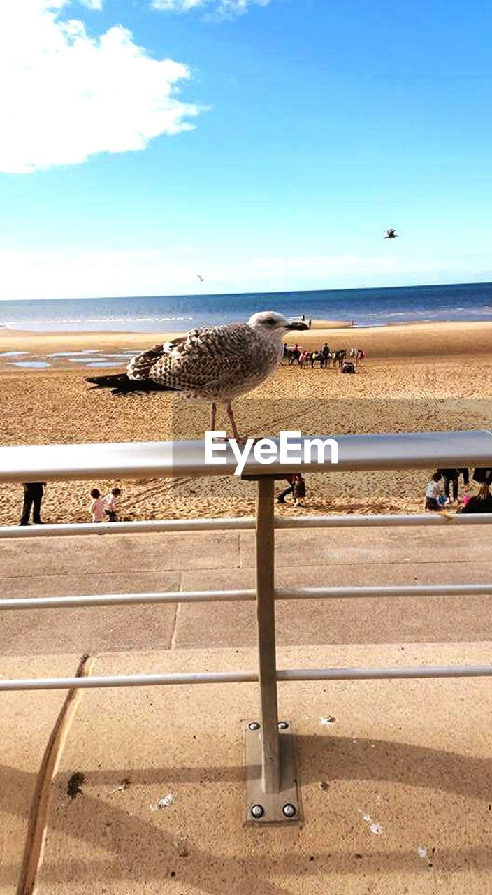 animal themes, sand, beach, sea, day, nature, sky, real people, outdoors, horizon over water, mammal, domestic animals, large group of animals, sunlight, water, animals in the wild, large group of people, beauty in nature, blue, scenics, bird, people