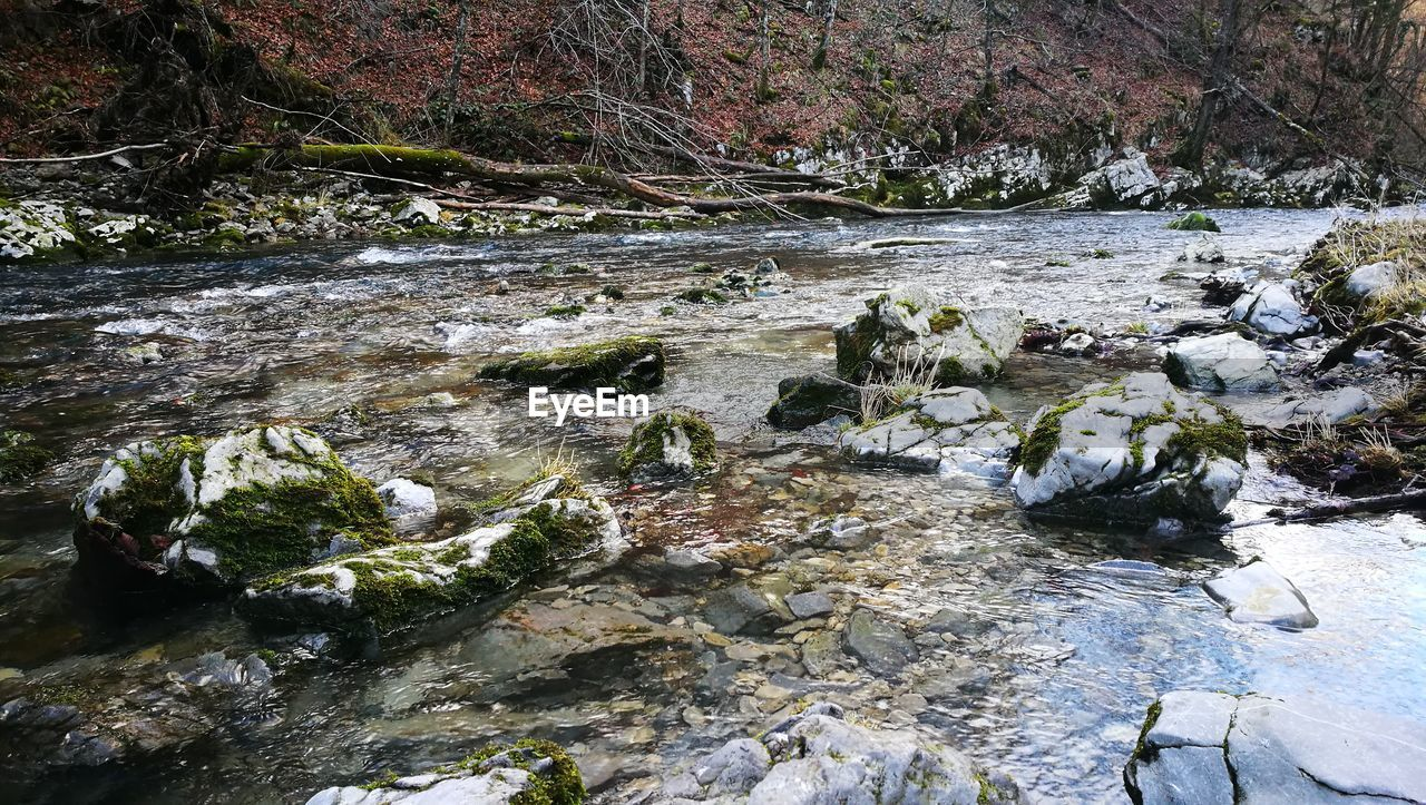 river, flowing water, water, nature, rock - object, tranquility, no people, forest, beauty in nature, outdoors, stream - flowing water, waterfall, tranquil scene, day, scenics, tree, landscape, riverbank