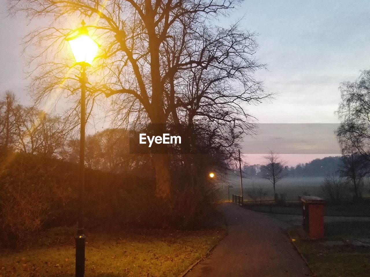 tree, sky, sun, bare tree, sunset, tranquil scene, no people, beauty in nature, nature, tranquility, outdoors, scenics, the way forward, road, landscape, fog, branch, day