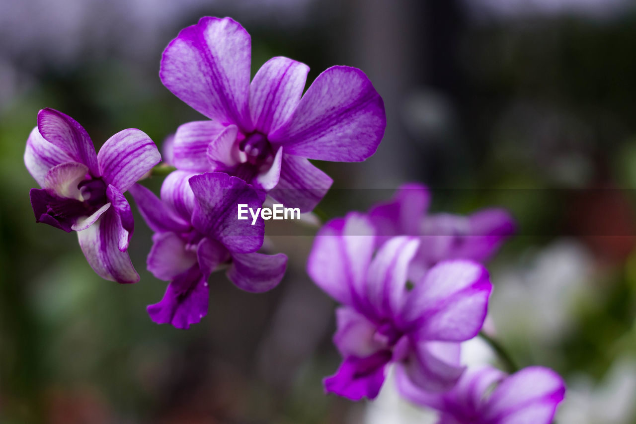 flowering plant, flower, vulnerability, fragility, petal, beauty in nature, plant, freshness, growth, inflorescence, flower head, purple, focus on foreground, close-up, nature, no people, day, botany, selective focus, outdoors