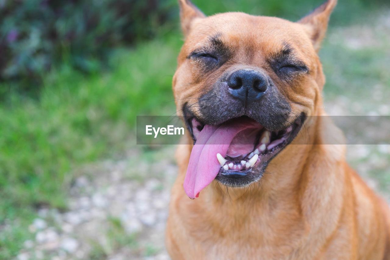 Close-Up Of Dog Panting Outdoors