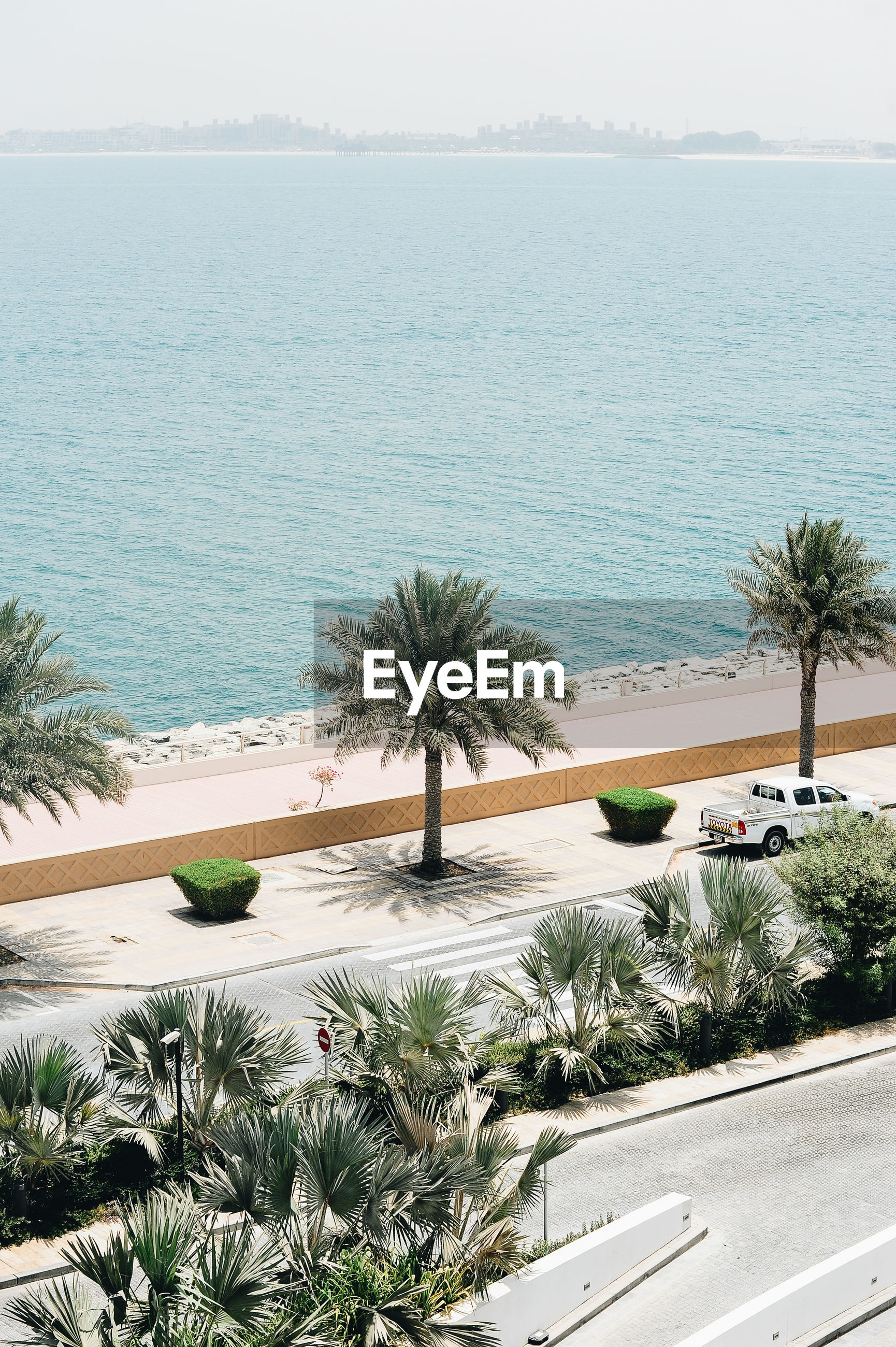 HIGH ANGLE VIEW OF PALM TREE BY SEA