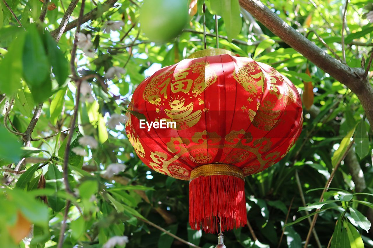CLOSE-UP OF RED LANTERN HANGING ON PLANT