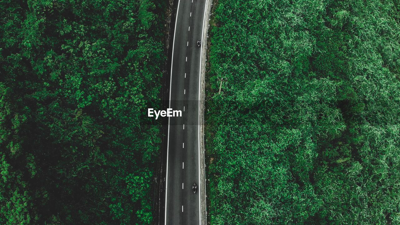 plant, green color, tree, growth, day, no people, nature, land, transportation, outdoors, high angle view, lush foliage, foliage, forest, beauty in nature, connection, grass, mode of transportation, tranquility, full frame