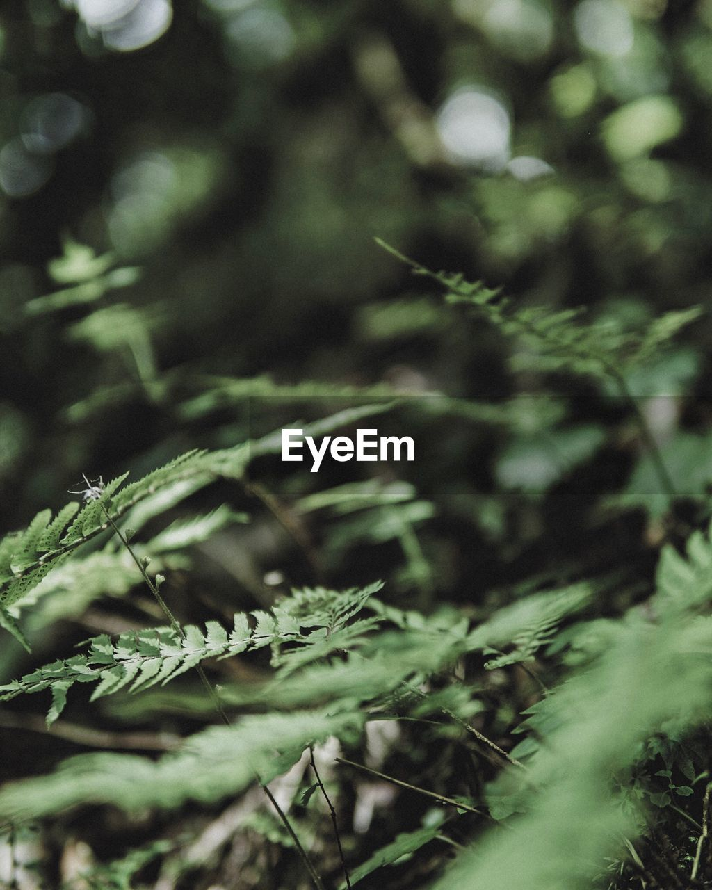 plant, growth, selective focus, nature, no people, close-up, day, tree, land, beauty in nature, tranquility, green color, focus on foreground, outdoors, plant part, leaf, forest, branch, field, sunlight, coniferous tree, fir tree