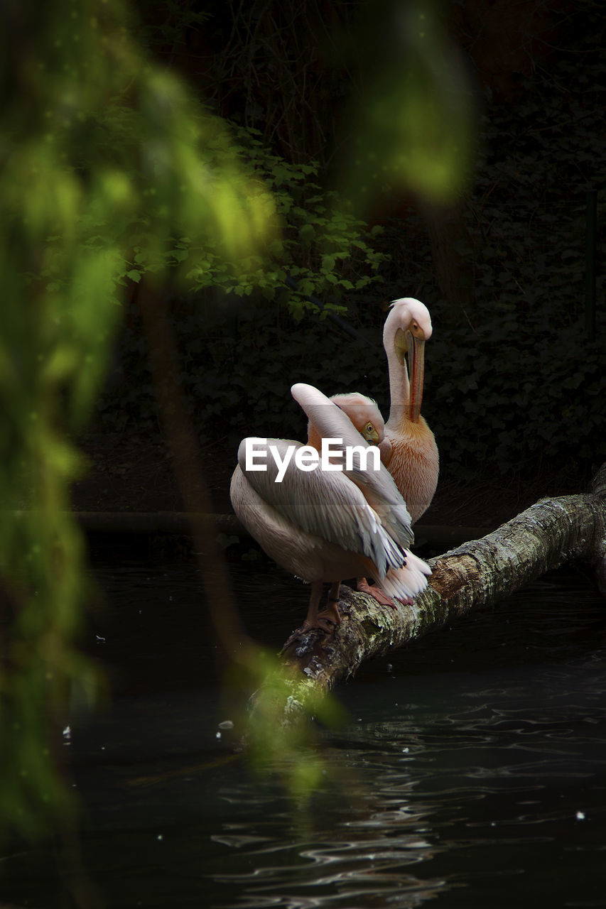 animals in the wild, animal wildlife, animal themes, animal, vertebrate, water, bird, lake, one animal, no people, waterfront, nature, swimming, day, beauty in nature, selective focus, zoology, animal neck