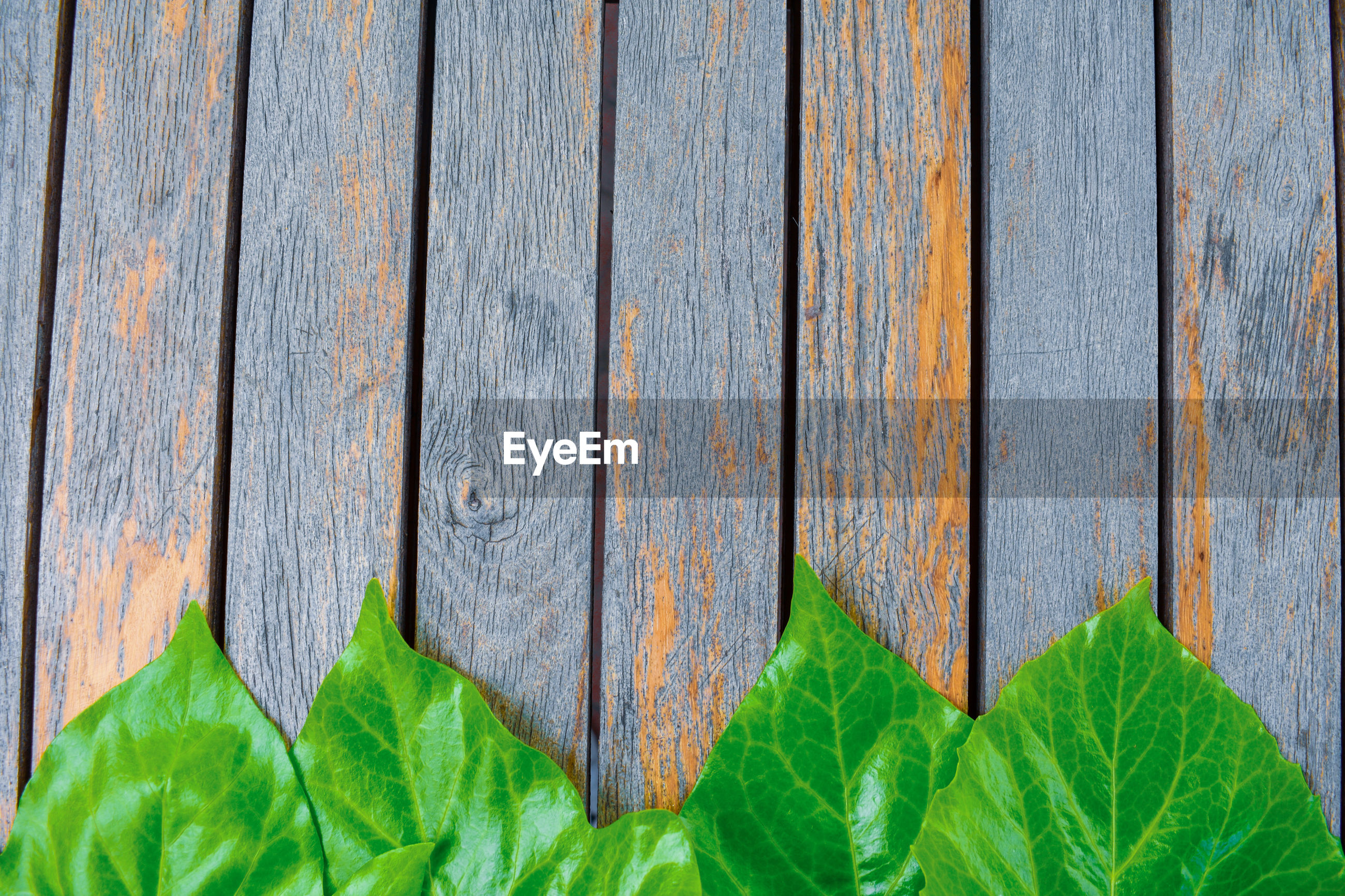 High angle view of leaves on wooden wall