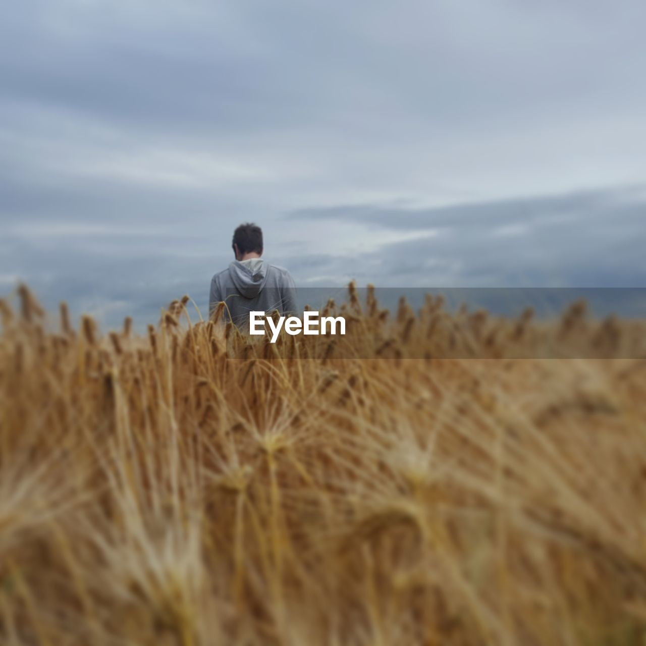 field, nature, one person, real people, agriculture, sky, outdoors, lifestyles, growth, day, beauty in nature, cereal plant, wheat, people