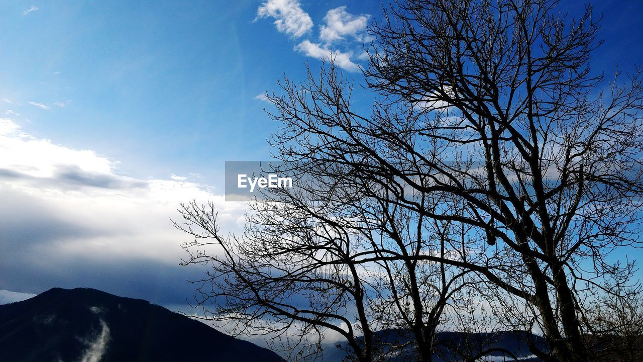 bare tree, sky, tree, low angle view, nature, branch, tranquility, beauty in nature, outdoors, day, tranquil scene, scenics, cloud - sky, no people, mountain