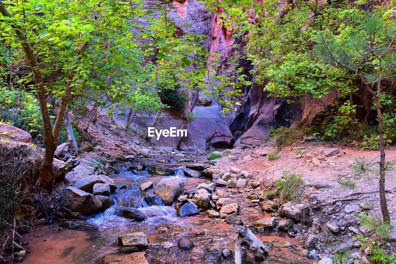 tree, plant, forest, rock, growth, beauty in nature, land, nature, no people, solid, rock - object, tranquility, day, water, outdoors, flowing, downloading, foliage, non-urban scene, flowing water