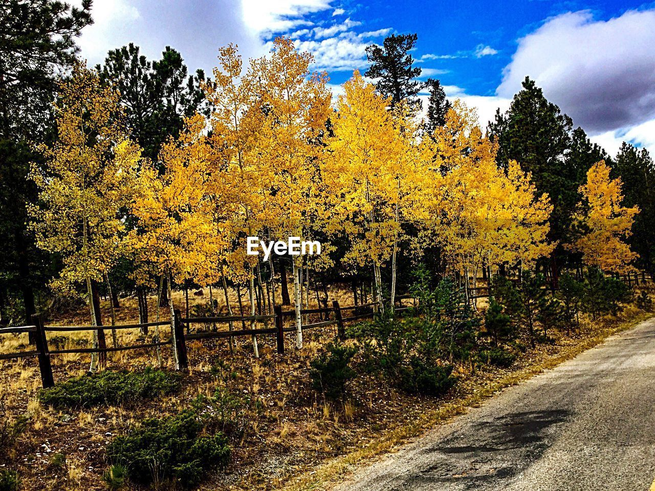tree, plant, beauty in nature, autumn, nature, change, no people, tranquility, sky, growth, cloud - sky, tranquil scene, barrier, yellow, scenics - nature, day, boundary, road, land, the way forward, outdoors, fall