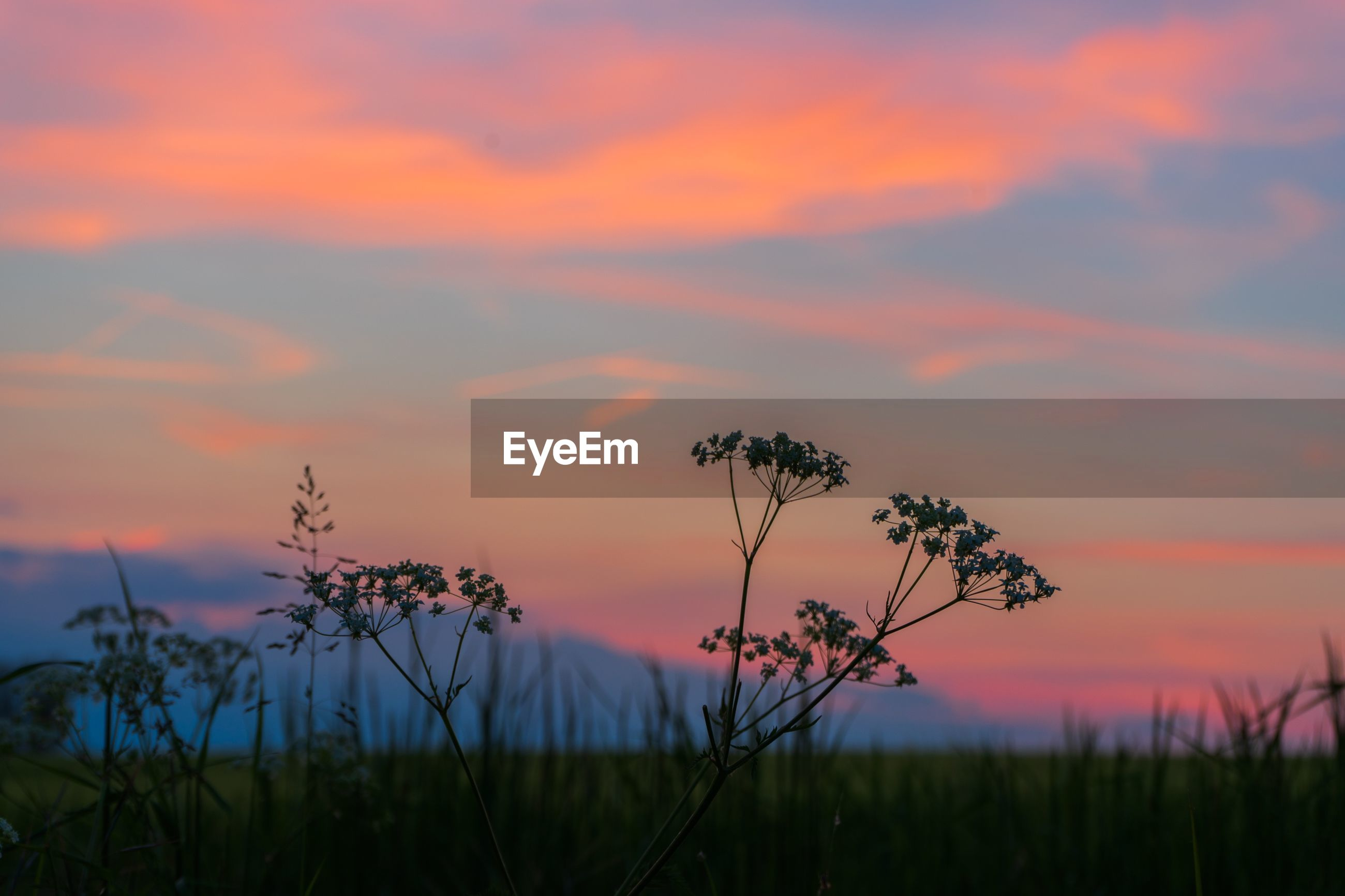 SCENIC VIEW OF SILHOUETTE PLANTS ON FIELD AGAINST ROMANTIC SKY